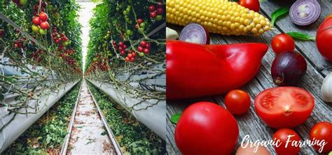 Best 8 Benefits Of Organic Farming   Methods And Its