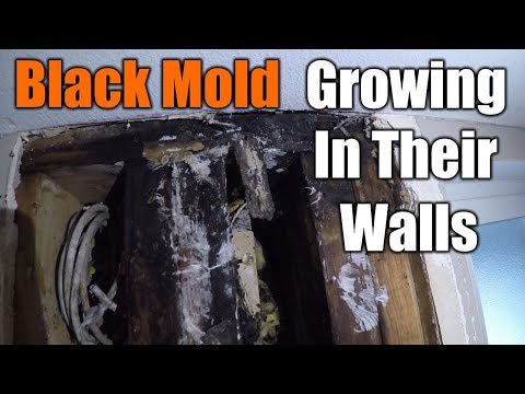 Is It Mold or Isn't It? — Extension and Ag Research News
