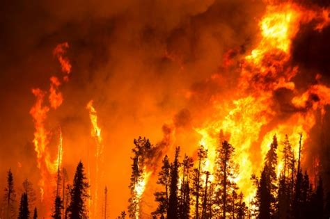 Forest Fire Free Stock Photo - Public Domain Pictures
