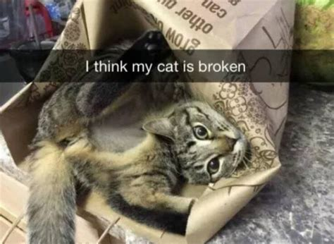40 Funny Memes Clean - Very Funny Animal Memes