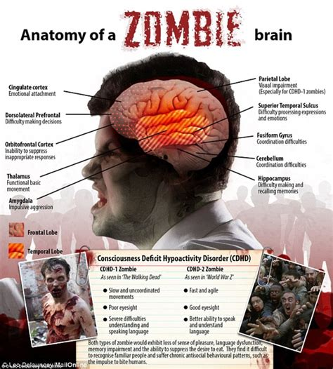 How to survive a zombie apocalypse   Daily Mail Online