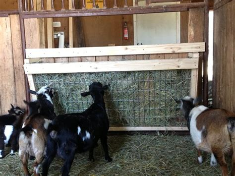 My New Goat Hay Feeder   Keeping A Family Cow