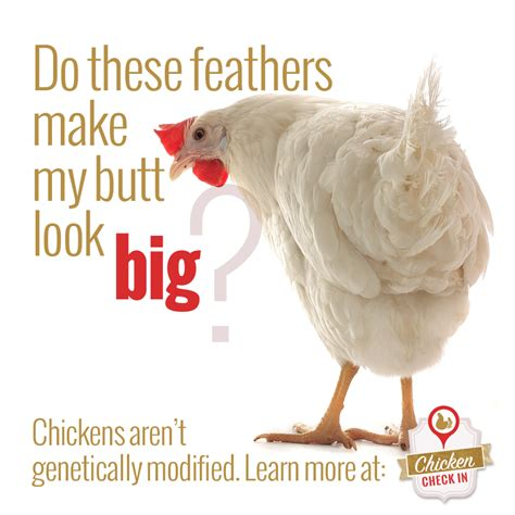 Are chickens genetically modified? Are there GMO chickens?