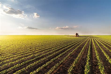 What Are The Pros And Cons Of Monoculture? - WorldAtlas