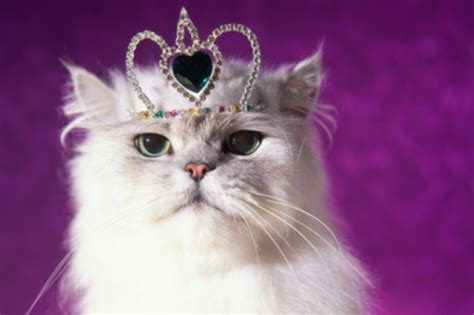 To celebrate International Cat Day here's 8 fascinating