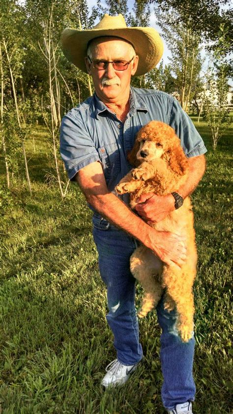 Colorado Red Royal Standard Poodles - RESERVING a Puppy