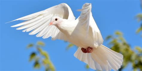 Cute White Pigeons Images New HD Pictures Downloads